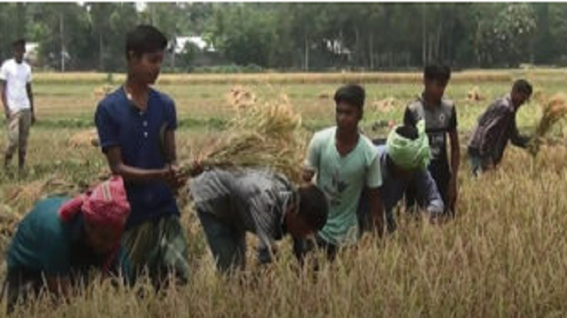 Students cut Malek's paddy to reach home