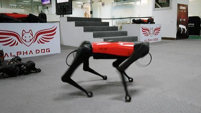 Chinese tech company develops robo-dogs